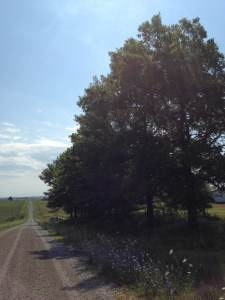 On the summit of this narrow dirt road was once the proud farm of the Goodvin family. All that remains are the trees that my grandmother planted many years ago.