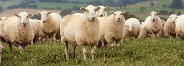 Proper 11: Sheep without a Shepherd