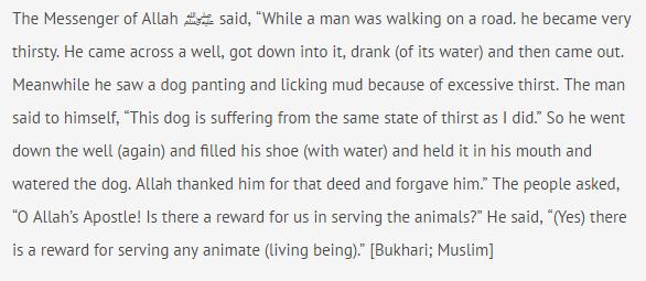 cat dog hadith