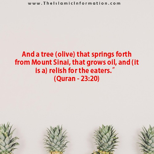 quran about olives