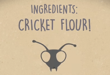 wp_migrated_A-Cricket-A-Day-Eating-Bugs-to-End-World-Hunger-YouTube