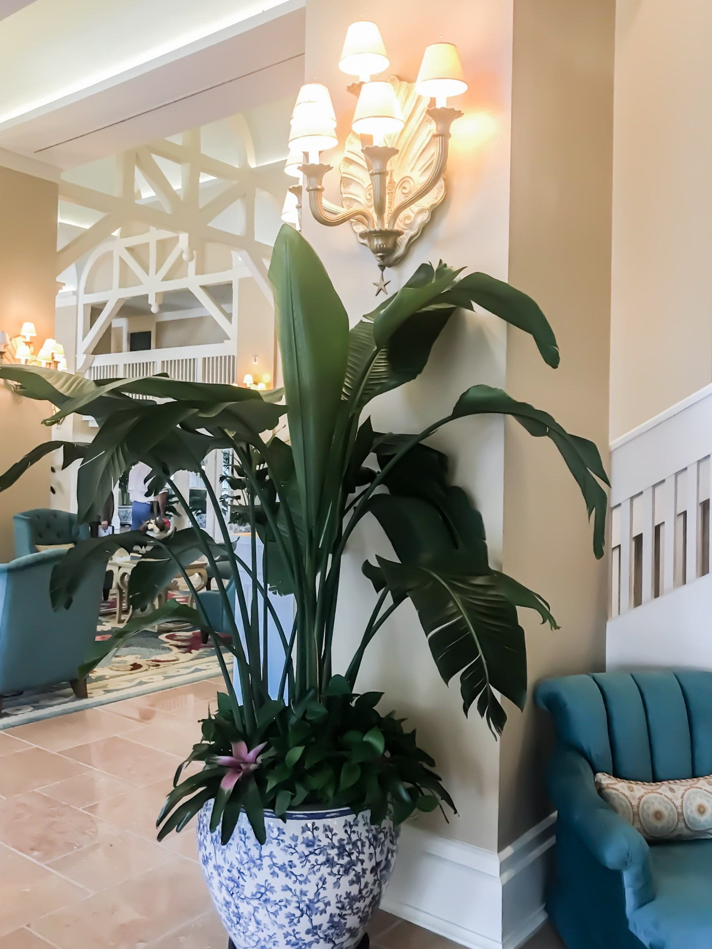 potted-plant-banana-plant-blue-and-white
