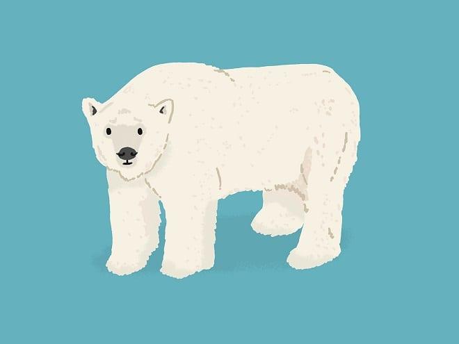 AF Polar Bear