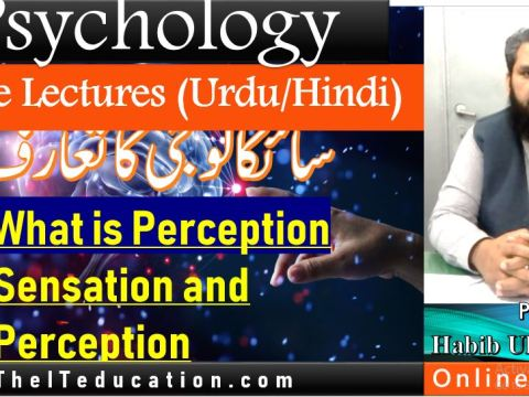 What-is-perception-introp-to-psycology-