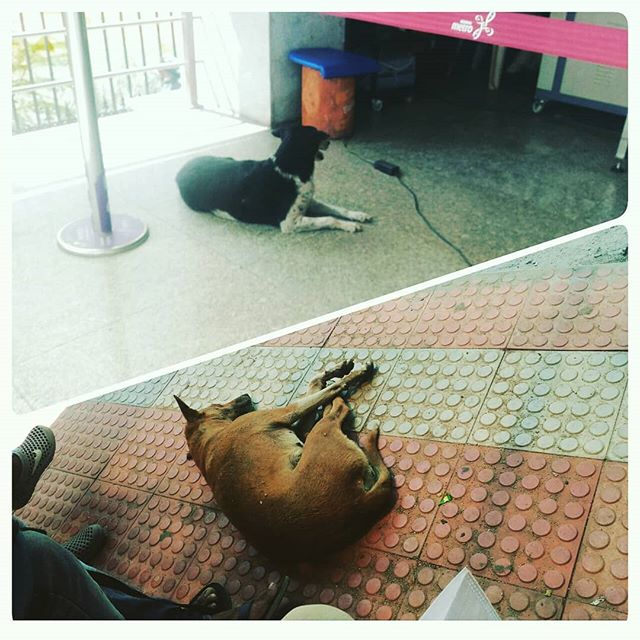 Metro Dog – BMTC Dog