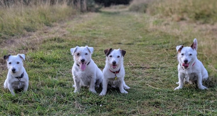 The Jack Russell Family