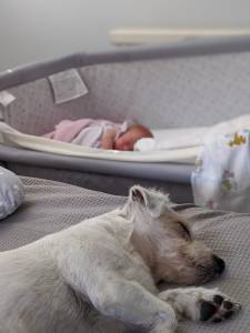 Are Jack Russell's good with babies