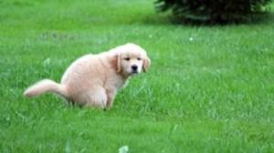 puppypoopin-590x330