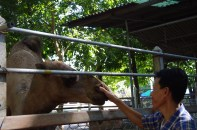 Animals farm next to Amphawa Floating Market