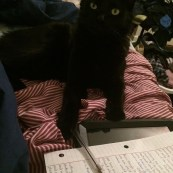 My cat is a writer as well.