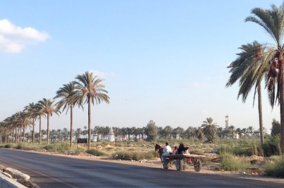 Along the Alex-Cairo road