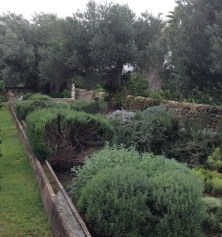 Irrigation channel by the herb garden