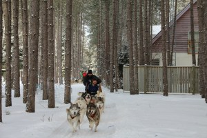 dogsledding 1