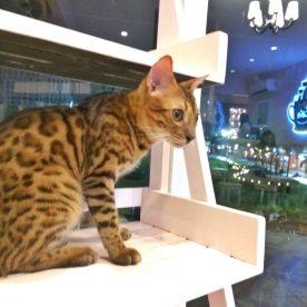 The Pet Cafe - www.thejerny.com