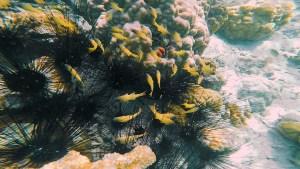 Coral Garden Coron - http://thejerny.com