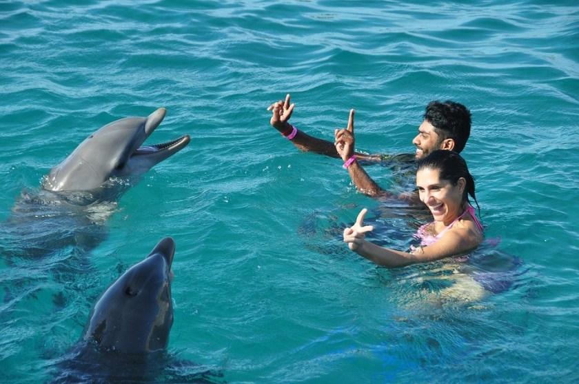 8 Best Big Island (Hawaii) Activities - Dolphin - http://thejerny.com - Punalu'u Black Sand Beach