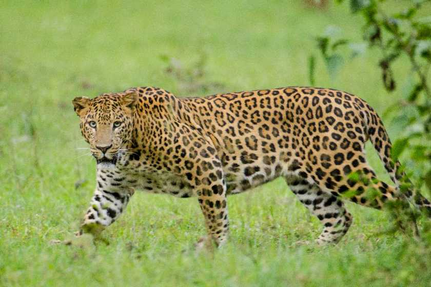 Top Things to Do and Places to Visit In Karnataka - Kabini Jungle Safari - http://thejerny.com