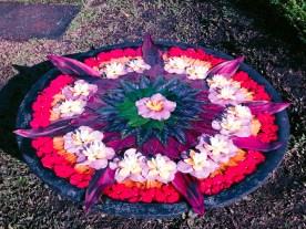 Paradizoo - Flower Garden - http://thejerny.com