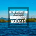 Bangkong Malapad - http://thejerny.com