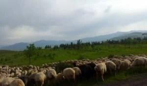 arpi armenia