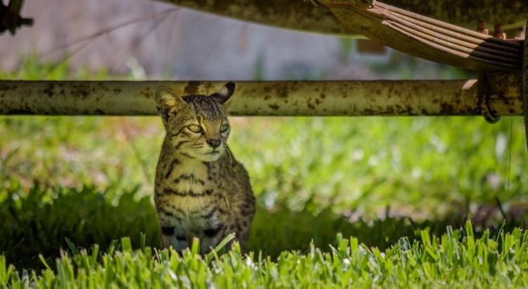 Geoffrey's Cat