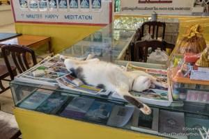 Cat relaxing at Big Buddha