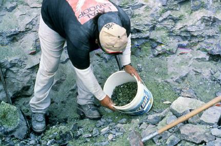 Một thợ mỏ khai thác San Carlos peridot. Photo: Cathleen McCarthy