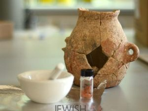 photo Credit: Courtesy of Israel Antiquities Authority/ Description: The discovery of jar sherds that yielded remains of olive oil in Zippori.