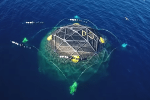 off shore fish farms salmon trout domes sea lice