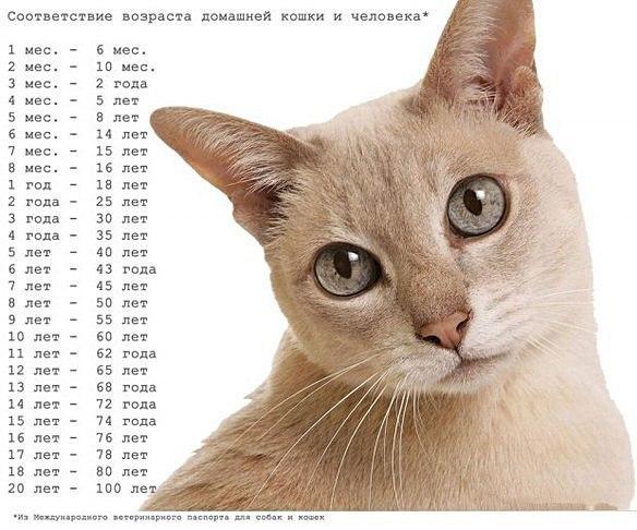 Возраст кошки по человеческим меркам The Jizn