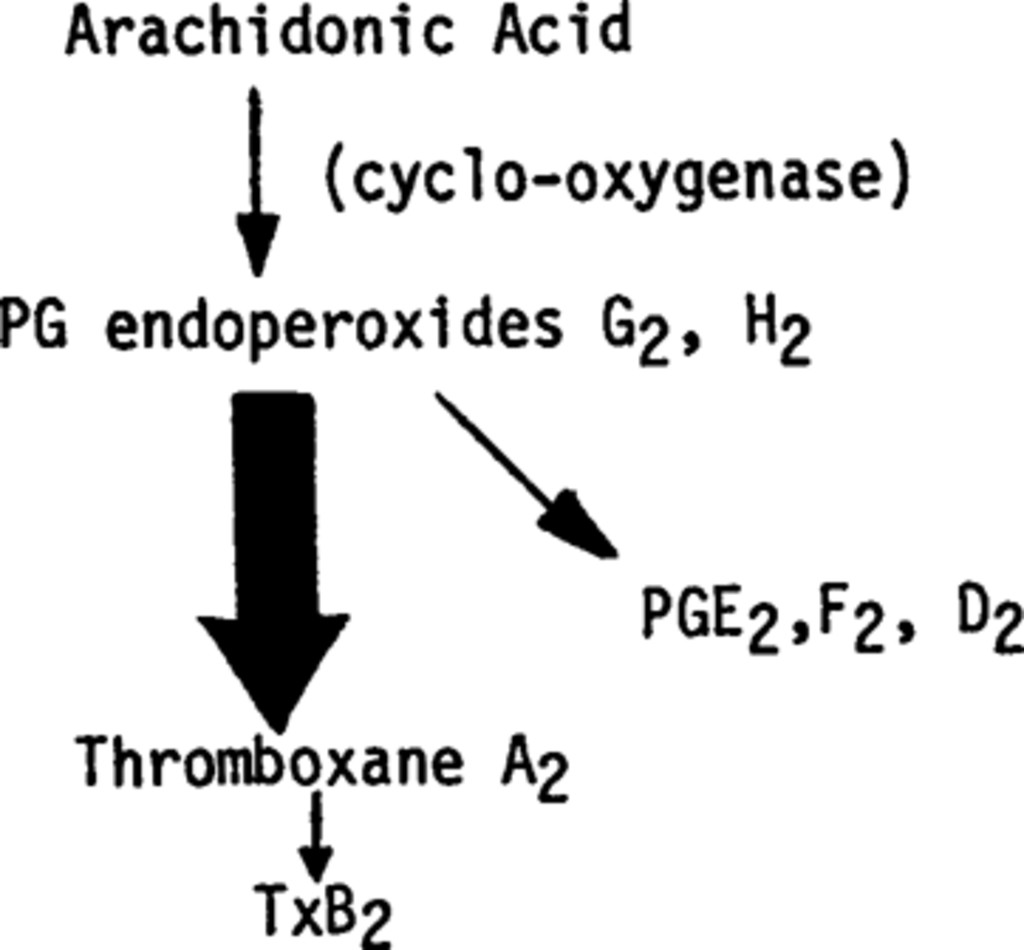 The Role Of The Prostacyclin Thromboxane System In