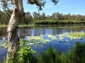 Beautiful spot, fish a plenty, but Matt and Chris did spot a Croc.