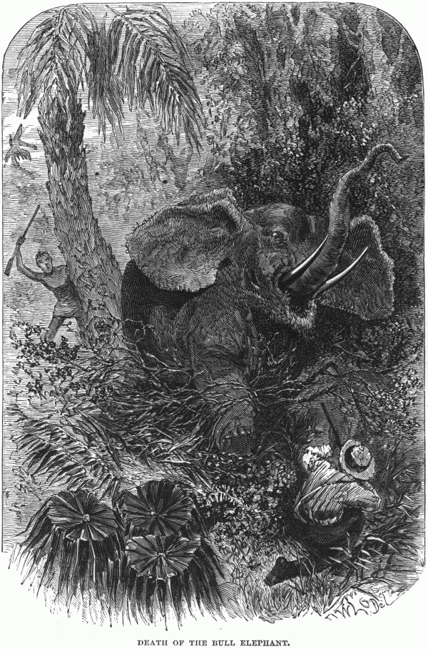 Death of a Bull Elephant du Chaillu