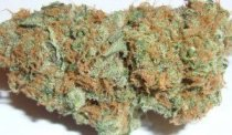 White-Berry-Marijuana-Bud