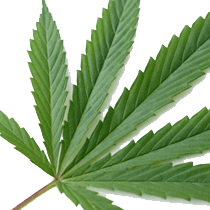 CBD Laws Pennsylvania