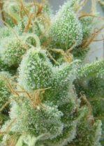cannabisisnotpot
