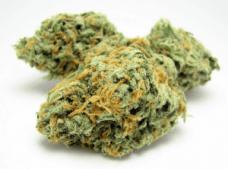 cannabisandcancer