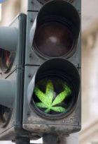 cannabisdriving