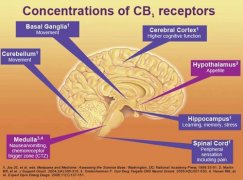 Activiation of the body's cannabinoid receptors helps with a number of diseases and ailments, including skin cancer according to this new study.