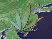 marijuana-new-jersey-dl