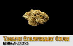 """Veganic Strawberry Cough won """"Best U.S. Flower"""", one of the most coveted of the event's awards."""