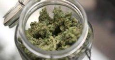 jarOcannabis