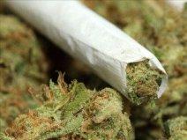 cannabisjointandbud