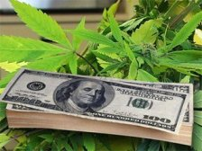 cannabismoney