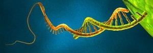 An image of a microRNA molecule.