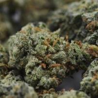 Uruguay Cannabis Sales