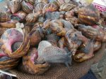 """West Africa's Largest Snail Farm: Boost for """"Congo Meat"""" Market"""