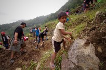 7: A child native of Banaue in Ifugao, Mountain Province helps, along with visiting volunteer groups, in the effort to restore the Batad Rice Terraces damaged by recent typhoons and landslides.