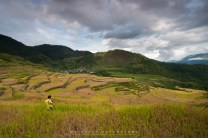 15: A visitor takes photographs of the Maligcong Rice Terraces in Mountain Province where now is the harvest season.