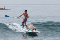 26: SURFIN' LAB. A Labrador Retriever named River rides the waves with surfer Toto Esquibel during the 7th Surf Break in San Juan, La Union, on Sunday. River—owned by Luke Landrigan, who runs the San Juan Surf Resort—has been trained to ride the big waves of the La Union coastline.